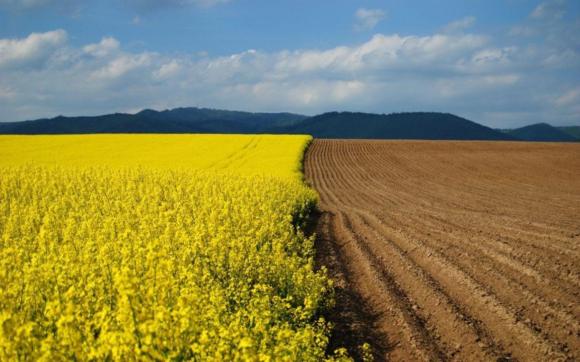 На Дніпропетровщині не обділяють захисників України земельними ділянками