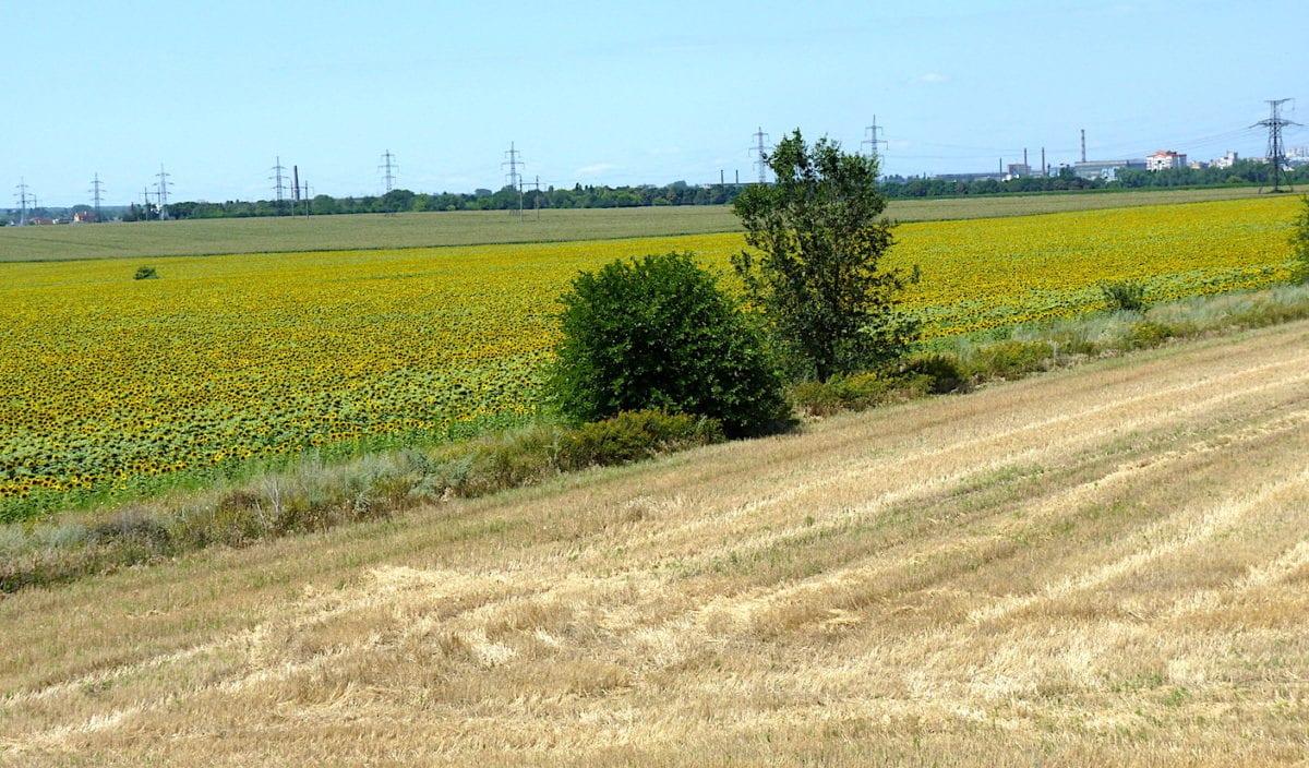 На Дніпропетровщині учасники бойових дій отримали близько 8000 земельних ділянок