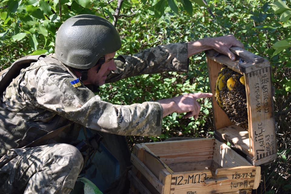 На передовій військовослужбовець облаштував вулик з ящиків з-під набоїв