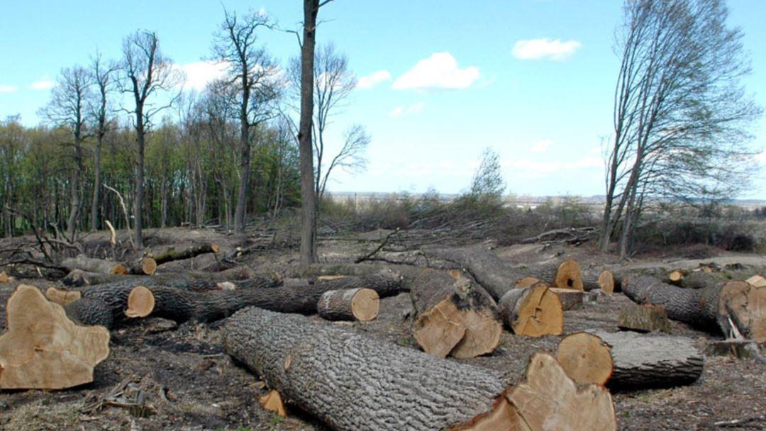 Військова прокуратура зупинила незаконну вирубку лісу на полігоні ДШВ