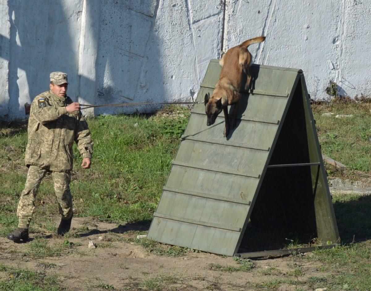 Собака-сапер і пес-чатовий: у Збройних Силах навчають чотирилапих знаходити вибухівку та нести вартову службу