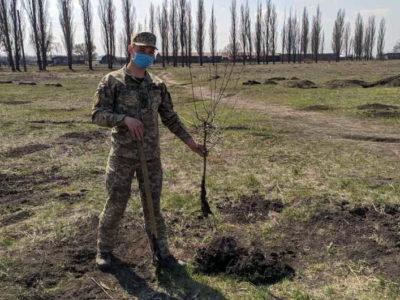 Є вільний час і бажання – посади дерево