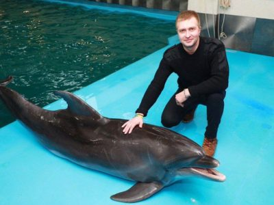 Безкоштовні сеанси дельфінотерапії для учасників АТО/ООС відновлено