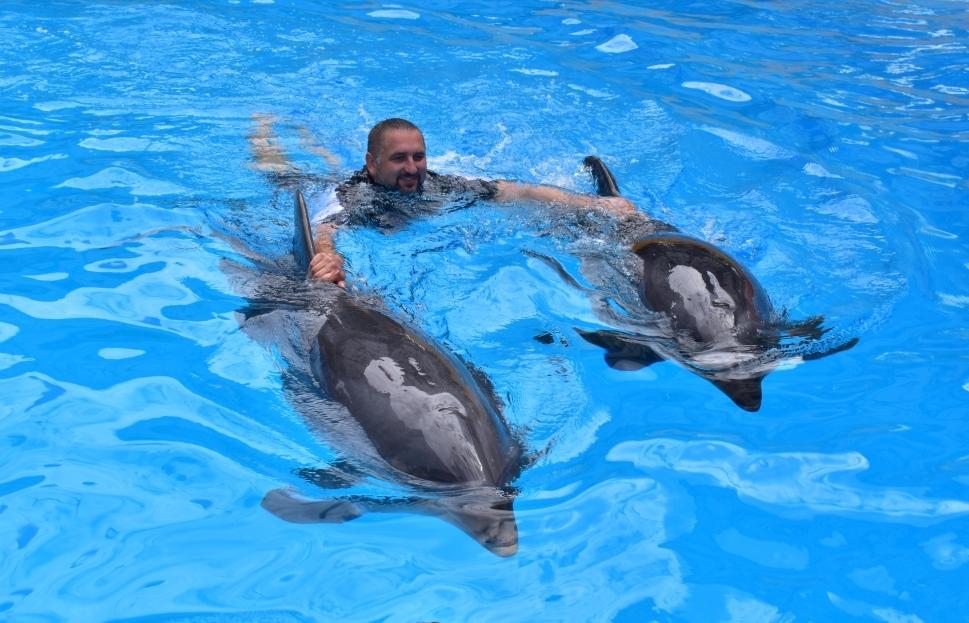 Дельфінотерапія: випробувано на собі