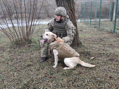 Коли службовий собака… одягає бронежилет