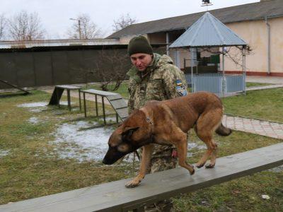 У бойових умовах собаки-сапери працюють максимум 3–4 години. Довше не витримує нервова система