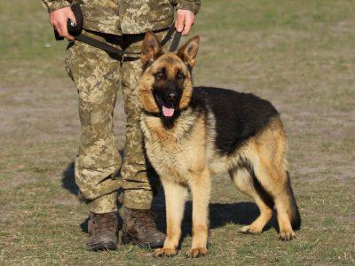 На строкову службу — зі своїм псом